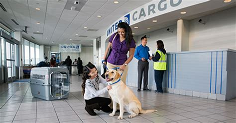 United Airlines Pets In Cabin by Pet Travel Kennel Types Guidelines United Airlines