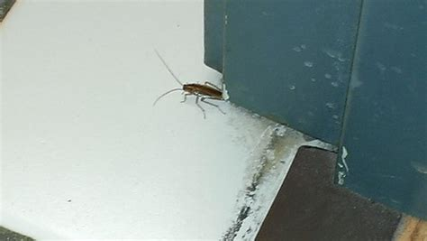 wisconsin dells bed bugs bed bug on the bed picture of mt olympus resort
