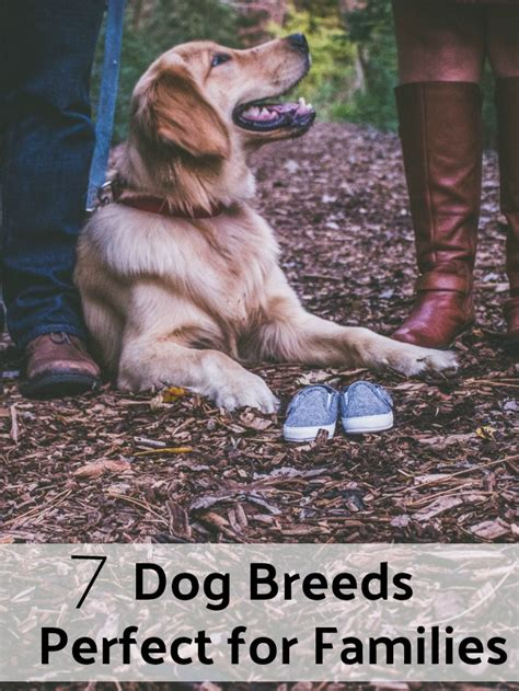 choosing the best dog breed for your family and children 7 dog breeds that are perfect for families