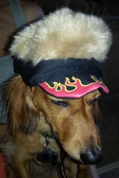 black spikey fur dog spiky hair dogs flame visor dog hat with spikey hair with