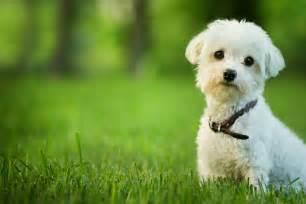 small dog mixed breeds best big dog breeds cute dog breeds