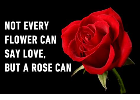 rose can not every flower can say love but a rose can love meme