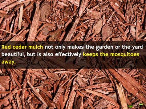 how to get rid of mosquitoes naturaly at home