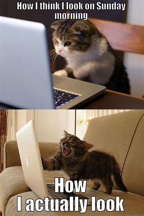 Sunday Morning Memes - sunday morning cats quickmeme