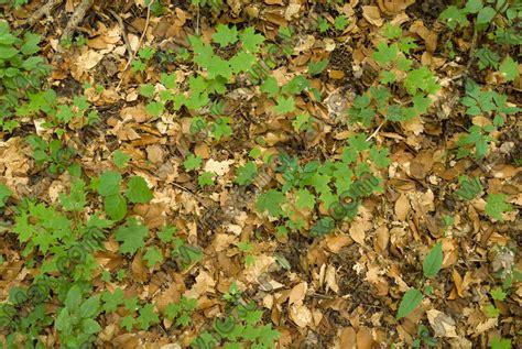 forest floor terrain 0046 texturemax