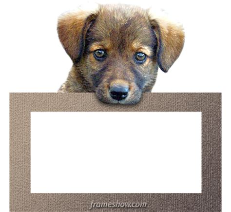 puppy picture frames photo frames for dogs 65000 personalized photo frames