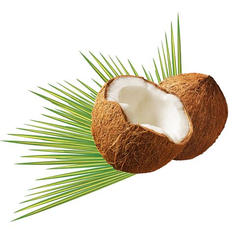 coconut skin 5 oils for skin you should be using