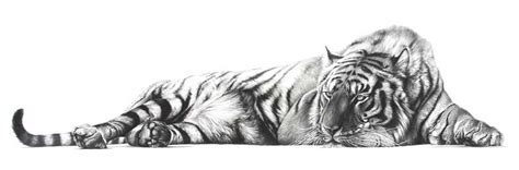 tiger drawing the bengal tiger homepage