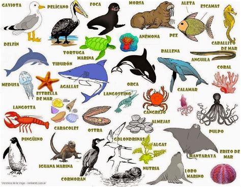 Imagenes De Animales Marinos Con Sus Nombres   conoce el mundo submarino enero 2015