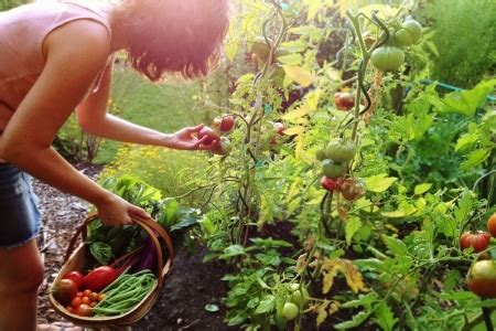 answers  vegetable fruit  herb gardening questions