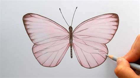 Timelapse Drawing A Light Pink Butterfly With Colored