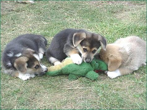 attack dogs pack of dogs attack crocodile in cairns adelaide animal hospital