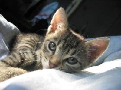 alimentazione gatto cucciolo cuccioli di gatto torturati dai militanti dell