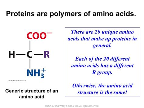 a protein is a polymer of proteins are polymers of amino acids ppt