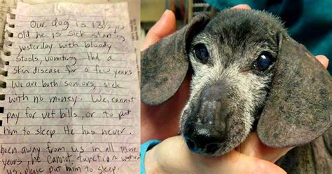 senior dogs senior left with note to be reunited with owners