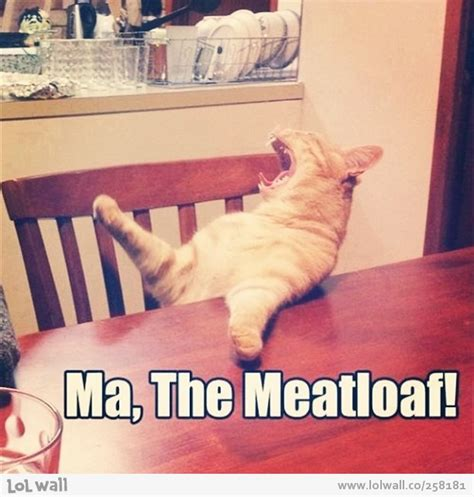 Meatloaf Meme - ma the meatloaf cat meme cat planet cat planet