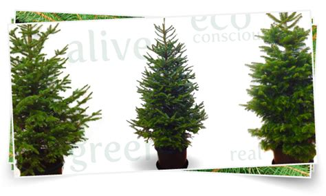 evergrow live tree rentals co home