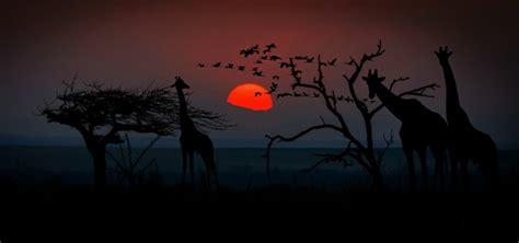 safari in tanzania 800x375 init on line
