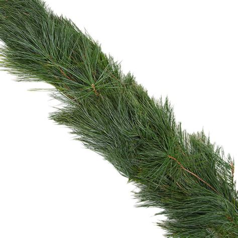fresh classic white pine holiday christmas garland