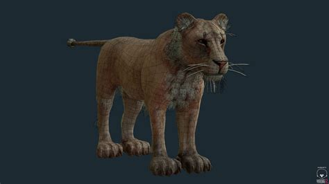 Film Lioness | 3d model lioness for games and film vr ar low poly obj