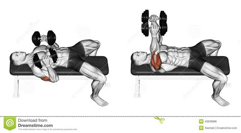 how to increase dumbbell bench press exercising dumbbell bench press lying down with y stock