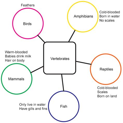 iris semantic map