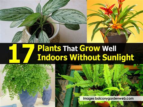 plants that do well indoors 17 plants that grow well indoors without sunlight