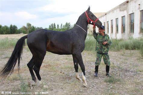 伊犁马图片选北京领汇展览 大宛马