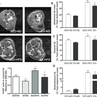 pdf exercise ameliorates high diet induced metabolic and vascular dysfunction and