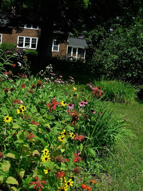 How To Garden How To Start A Butterfly Garden American Butterfly