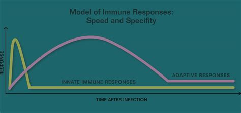 innate immunity a question of balance immunology can suppression of the immune system help