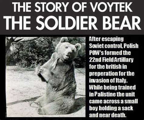 index of wp content images 2013 01 the story of the soldier bear