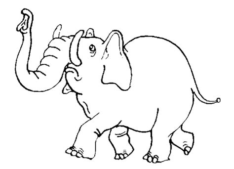 safari animals coloring pages preschool preschool jungle animals coloring pages colorings net