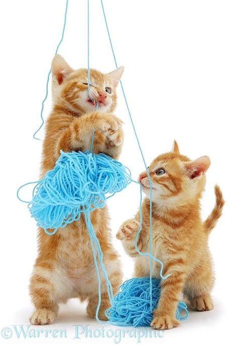 who plays cat 149 best cats and a of yarn images on
