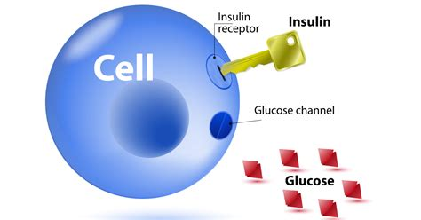 Teh Insulin insulin resistance and weight gain weight loss resources