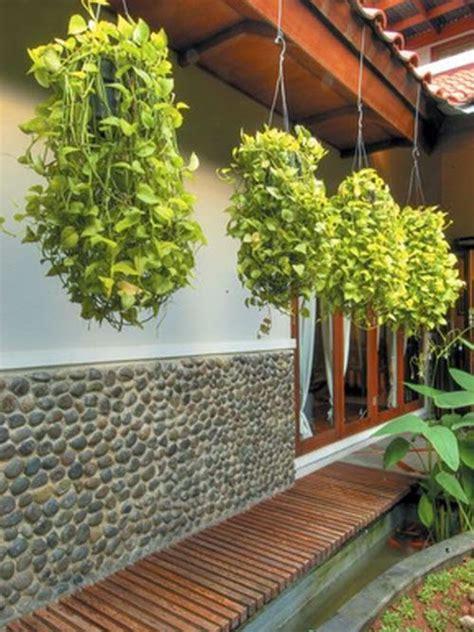 tips memulai tanaman gantung ragam tanaman