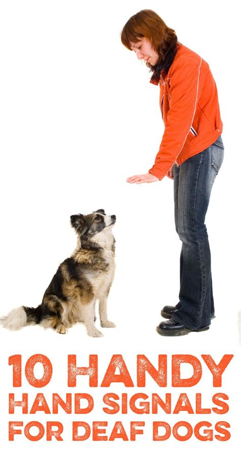 how to a deaf signals 9 best images about deaf on 10 language and for dogs