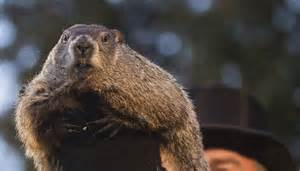 groundhog day tradition groundhog day 2017 early or six more weeks of