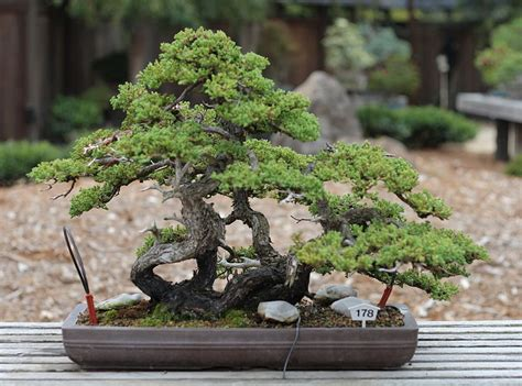 tree meaning bonsai tree meaning things about trees