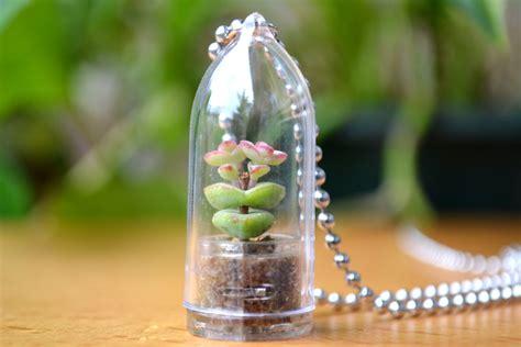 baby s necklace live terrarium necklace terrarium