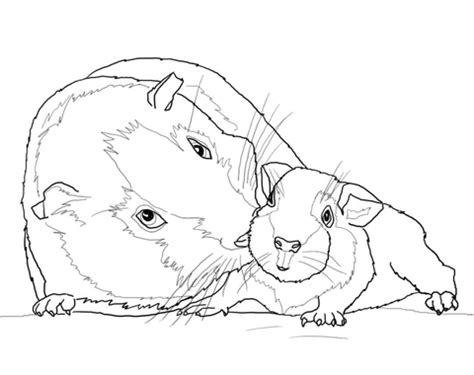 Baby Guinea Pig Coloring Sheets Coloring Pages Guinea Pig Coloring
