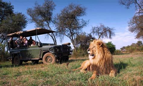 south city trip and safari with airfare in cape town null groupon getaways