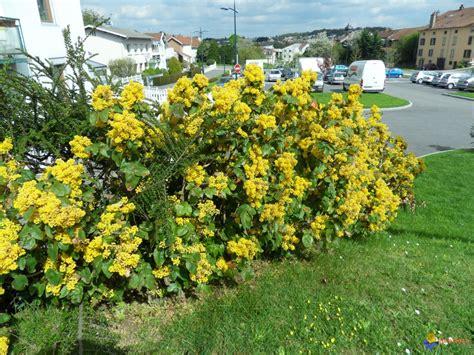 Buisson Fleur Jaune photo buisson a fleurs jaunes