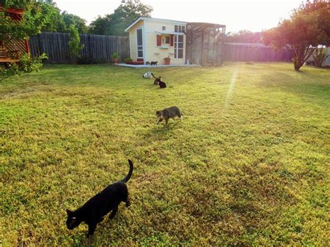 cat in backyard street cat rescue giving hope to feral cats in austin