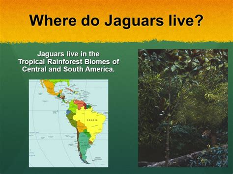 jaguar live jaguars by byrd ppt