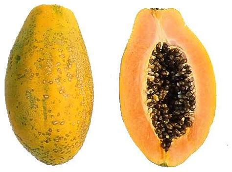 how to a not to paw at you pawpaw 1kg harvesters fruits and vegetables