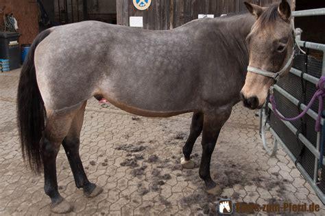 decke pferd pferd scheren so geht s einfach und schnell