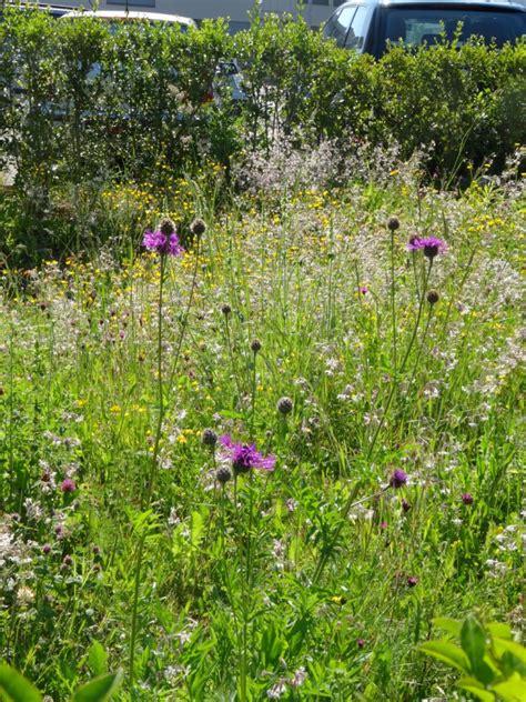 Warum So Viele Pilze Im Garten by Wildblumengarten Naturschutz Illnau Effretikon