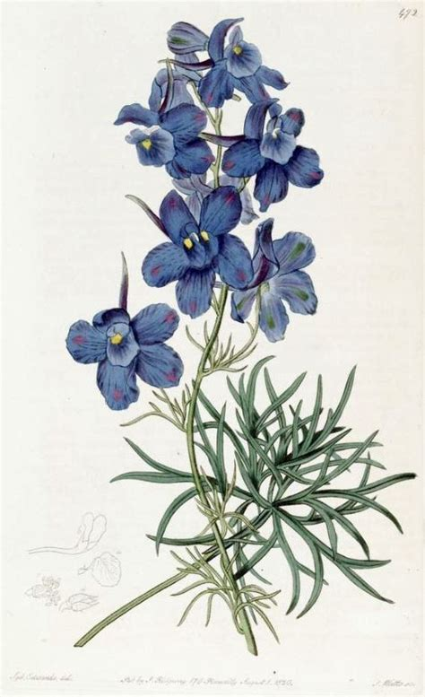 delphinium tattoo delphinium july birth flower idea flora and