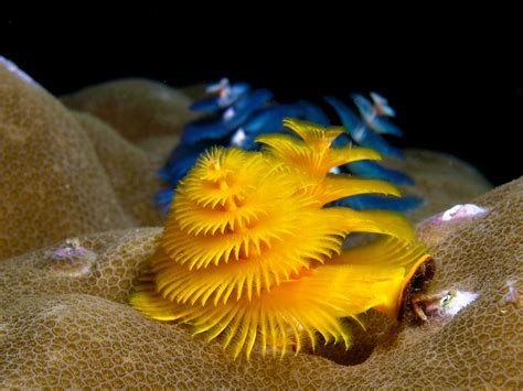 christmas tree worm tumblr